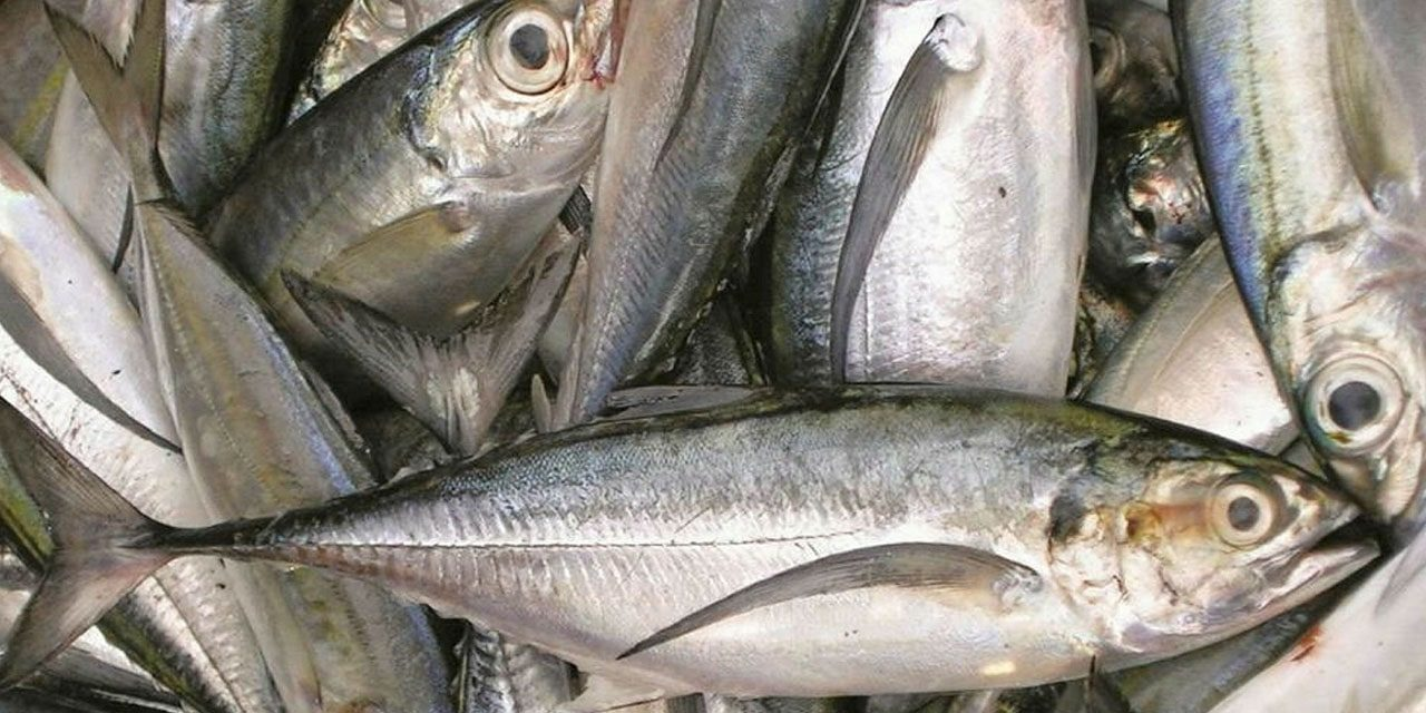 Fishing rights awarded