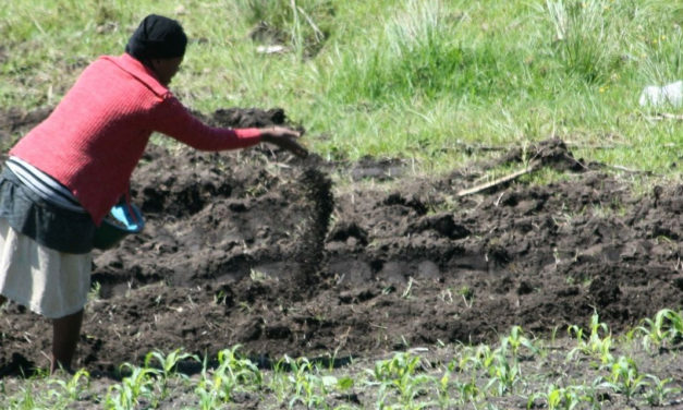 Functions of Nutrients in Crop Production