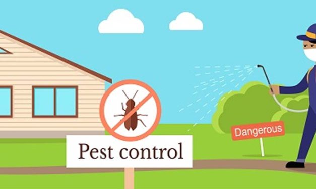 Pest Control Using Homemade remedies