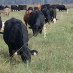 The basics of grazing management