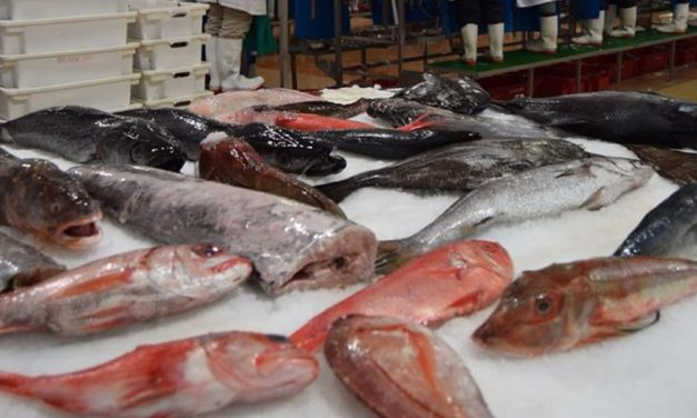 Govt targets N$183m in new fish quotas auction