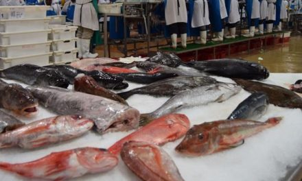 Govt raises only N$189 million from hake auction